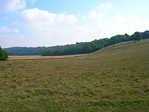 Marden, West Sussex - Image: Up Marden Ridge geograph.org.uk 220759