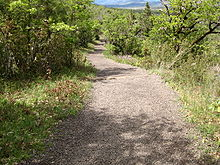Gravel trail winding through thick vegetation.