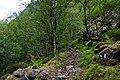 Utladalen birch forest.jpg