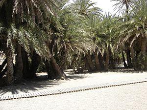 Vai (Crete) - Vai palm forest