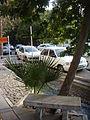 Vali Asr Street, Tehran.jpg