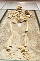 Vampire skeleton of Sozopol in Sofia PD 2012 17.JPG