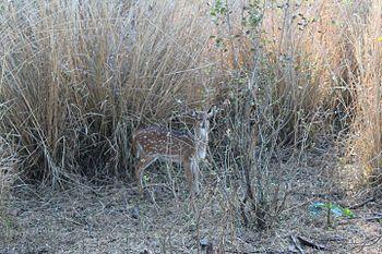 Van Vihar National Park, Bhopal (MP).jpg