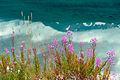 Vaxtlighet i kanten av en fjallsjo i Nordnorge, Johannes Jansson.jpg