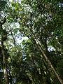 Vegetación de la Reserva de la Biosfera La Amistad Panama (RBLAP) 35.JPG