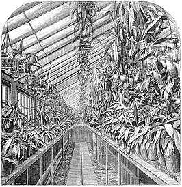 Illustratie van Veitch's Nepenthes-kas in The Gardeners' Chronicle, 1872