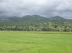 Vemasse rice crop ready to harvest, with dry forest on hills, 24 Mar 2006.jpg