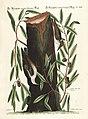 Verzameling van uitlandsche en zeldzaame vogelen (Tab. XLIV) (7894187988).jpg