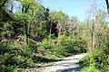 Via degli Dei, Monzuno, Brento, nei pressi di Via Fosse 01.jpg