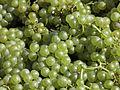 Vigne Chardonnay (Festigny) Cl.J.Weber02 (23569136122).jpg