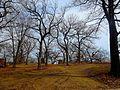Vilas Circle Bear Effigy Mound and the Curtis Mounds - panoramio.jpg
