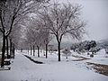 VistaNevada 2010February13 DehesaBoyaldePuertollano.jpg