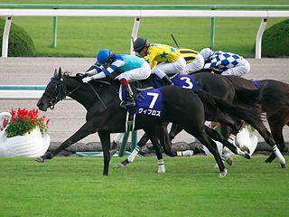 Vivlos Japanese-bred Thoroughbred racehorse