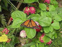 WPZ Butterflies & Blooms 05.jpg