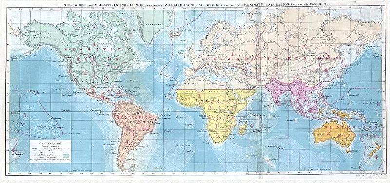 Wallace biogeography.jpg