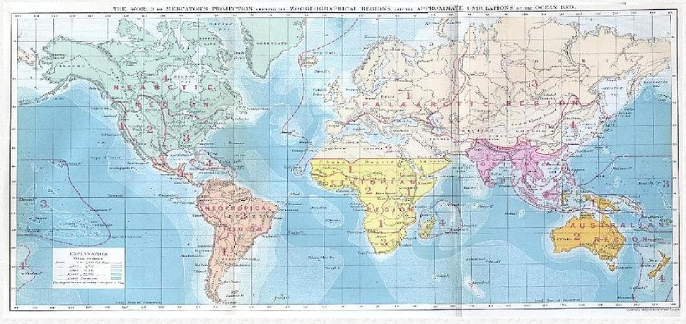 Wallace biogeography
