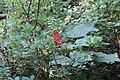 Wapta Falls Trail IMG 4944.JPG