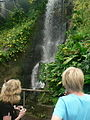 Waterfall, Humid Tropics Biome, Eden Project - geograph.org.uk - 230294.jpg