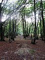 West Wood - geograph.org.uk - 1530519.jpg