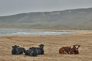 White Park Bay Beach in Country Antrim, Northern Ireland