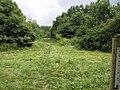 Widbrook Wood (geograph 2522197).jpg