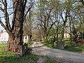 Wien-Hütteldorf - Naturdenkmal 200 - östliche Allee beim Europahaus.jpg