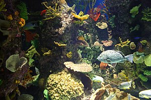 Shedd Aquarium - The wild reef exhibited at the Shedd Aquarium.