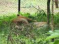 Wildlife Safari - 7.jpg