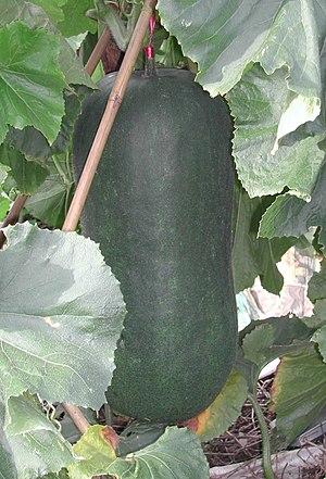 Wax Gourd - Image: Winter melon
