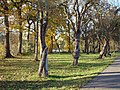 Woerden park 8-11-2003 - panoramio.jpg