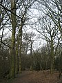 Woodland Track in Grove Park Woodlands - geograph.org.uk - 1760653.jpg