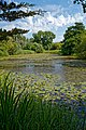 Woods Mill, Sussex Wildlife Trust, England - lake 02.jpg