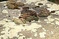 Worms juedischer Friedhof Heiliger Sand 108 (fcm).jpg