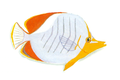 XRF-Chaetodon xanthocephalus.png