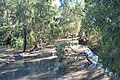 Yanko Creek Kidman Way 002.JPG