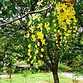 Yellow flowers. nature at its best.jpg