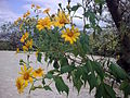 Yellow flowers4427.jpg