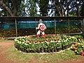 Yercaud 44th Flowershow-6-yercaud-salem-India.jpg