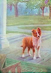 A young dog stands on a porch. It has short hair.