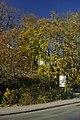 Zábřeh, stromy v Havlíčkově ulici II.jpg