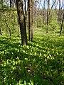 Zolotonis'kyi district, Cherkas'ka oblast, Ukraine - panoramio (622).jpg
