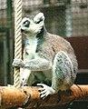 Zoo-koeln-1996-affenhaus-affe1.jpg