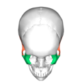 Zygomaticotemporal suture - superior view.png