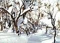 (((زمستان سنگين ))) - panoramio.jpg