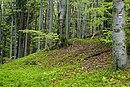 Čantoryje - national nature reserve in Silesian Beskids, Czechia 032.jpg