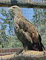 Бердянский зоопарк 059.jpg