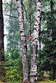 В лесу - panoramio (17).jpg