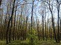 Гора до с. Ивановци - panoramio (1).jpg