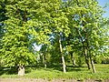 Графський парк (парк Ніжинського педінституту), Ніжинський район, м. Ніжин 74-104-5004 15.JPG