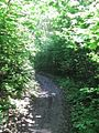 Дендрологічний парк 11.jpg